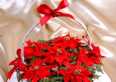 Poinsettia / Ivy / Holly